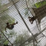 Climb Netting with children laying in it.