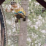 Climbing netting for children that meets ASTM safety regulations